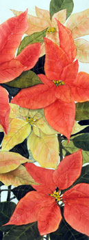 """Poinsettia""   34""x17"", watercolor (half of diptych)"