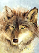 """Wolf"", by Mary Rose Janya, watercolor"